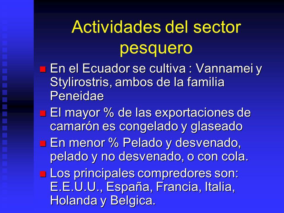 Actividades del sector pesquero En el Ecuador se cultiva : Vannamei y Stylirostris, ambos de la familia Peneidae En el Ecuador se cultiva : Vannamei y