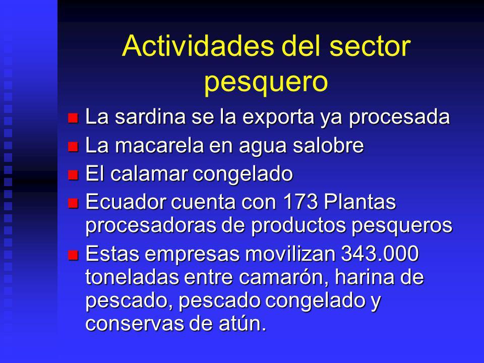 Actividades del sector pesquero La sardina se la exporta ya procesada La sardina se la exporta ya procesada La macarela en agua salobre La macarela en
