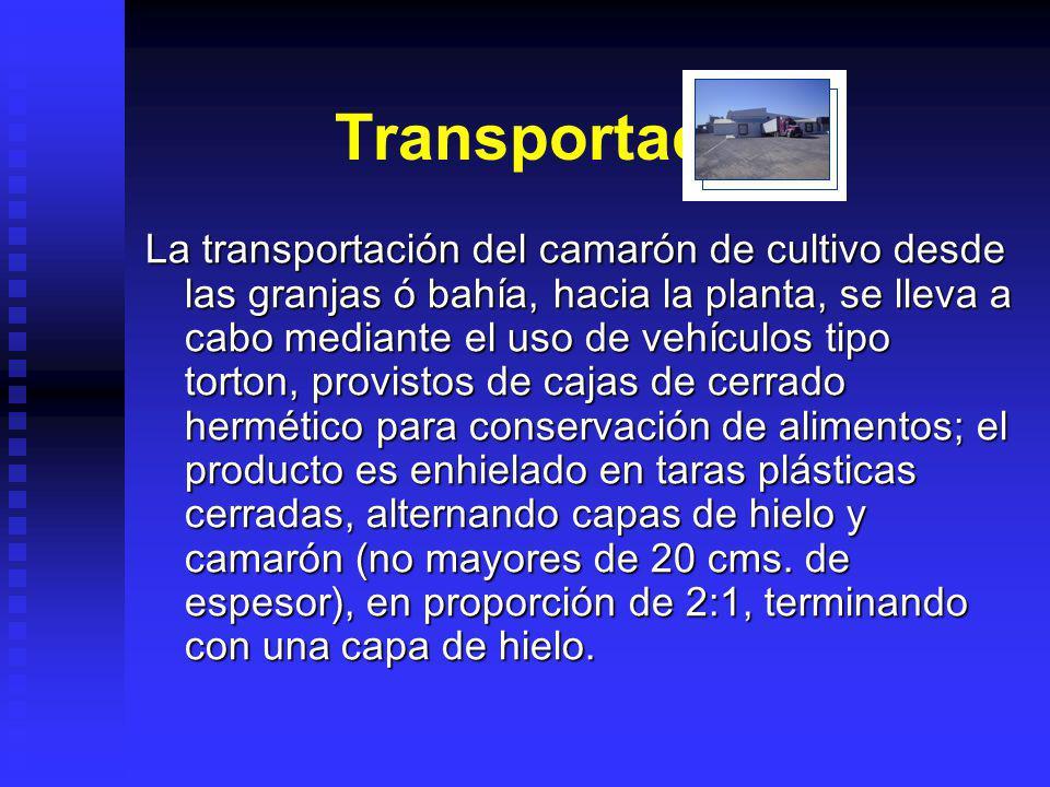 Transportación. La transportación del camarón de cultivo desde las granjas ó bahía, hacia la planta, se lleva a cabo mediante el uso de vehículos tipo