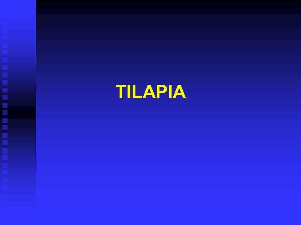 TILAPIA