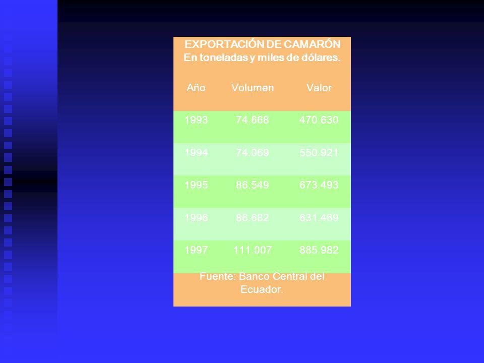 EXPORTACIÓN DE CAMARÓN En toneladas y miles de dólares. AñoVolumenValor 199374.668470.630 199474.069550.921 199586.549673.493 199686.682631.469 199711