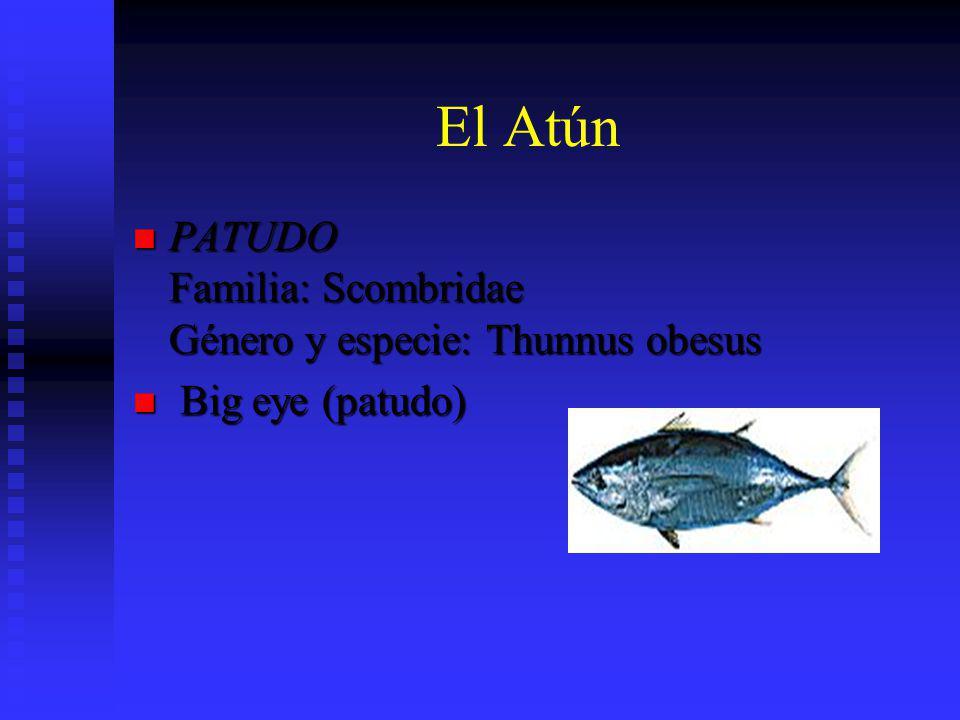 El Atún PATUDO Familia: Scombridae Género y especie: Thunnus obesus PATUDO Familia: Scombridae Género y especie: Thunnus obesus Big eye (patudo) Big e