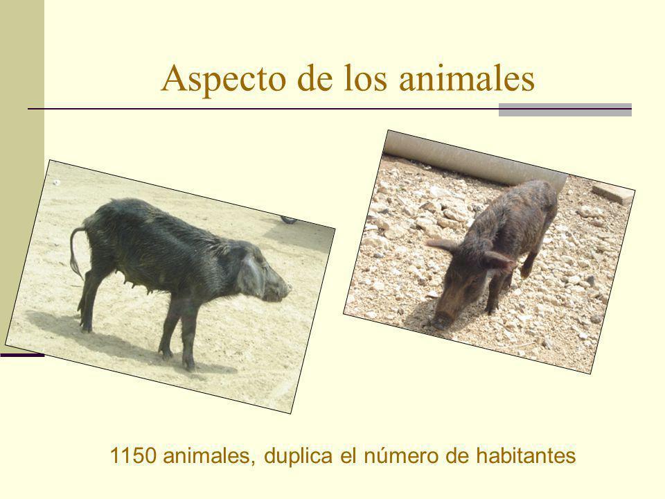 Aspecto de los animales 1150 animales, duplica el número de habitantes