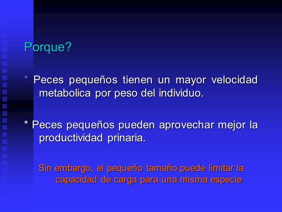 Porque.* Peces pequeños tienen un mayor velocidad metabolica por peso del individuo.