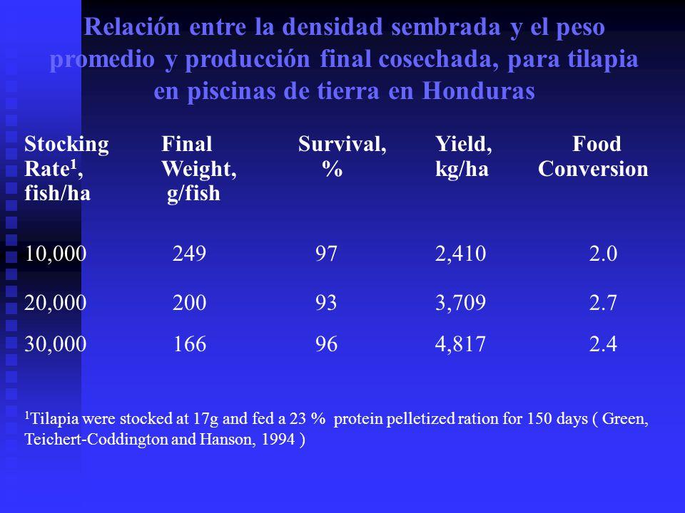 StockingFinalSurvival,Yield,Food Rate 1,Weight, %kg/ha Conversion fish/ha g/fish 10,000 249 97 2,410 2.0 20,000 200 93 3,709 2.7 30,000 166 96 4,817 2.4 1 Tilapia were stocked at 17g and fed a 23 % protein pelletized ration for 150 days ( Green, Teichert-Coddington and Hanson, 1994 ) Relación entre la densidad sembrada y el peso promedio y producción final cosechada, para tilapia en piscinas de tierra en Honduras