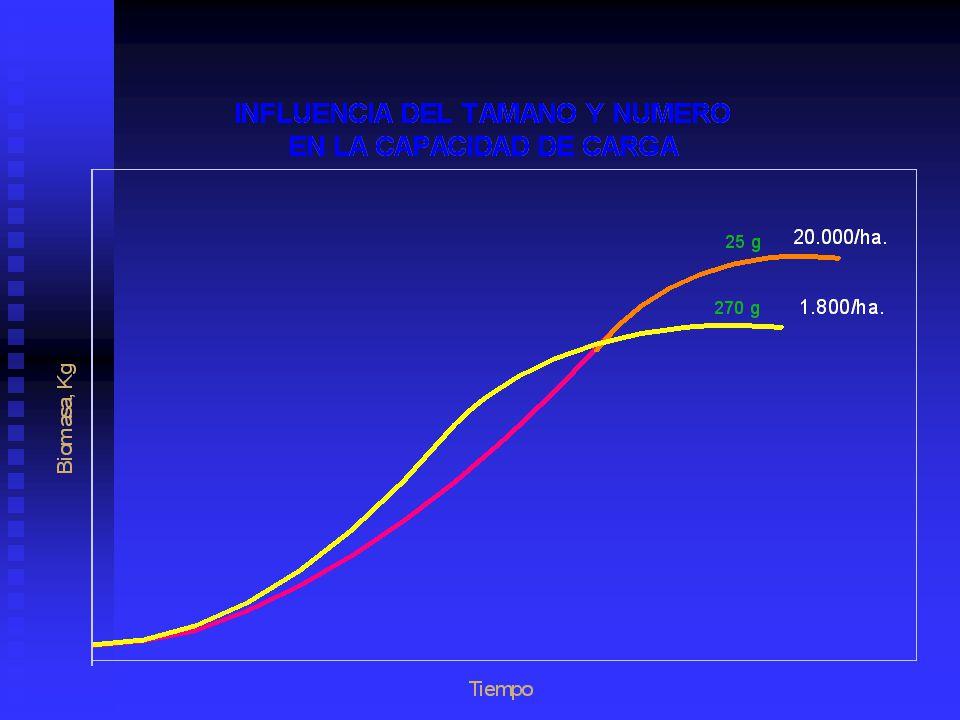 Grado de Crecimiento Cuando el organismo es pequeño no tiene la capacidad de crecer muy rápido, puesto que su peso es pequeño Cuando el organismo es pequeño no tiene la capacidad de crecer muy rápido, puesto que su peso es pequeño Como se incrementa el tamaño, este tiene la habilidad de adicionar peso y por lo tanto este se incrementa Como se incrementa el tamaño, este tiene la habilidad de adicionar peso y por lo tanto este se incrementa Finalmente puede alcanzar un punto en donde una máxima capacidad de adicionar peso a sido alcanzada.