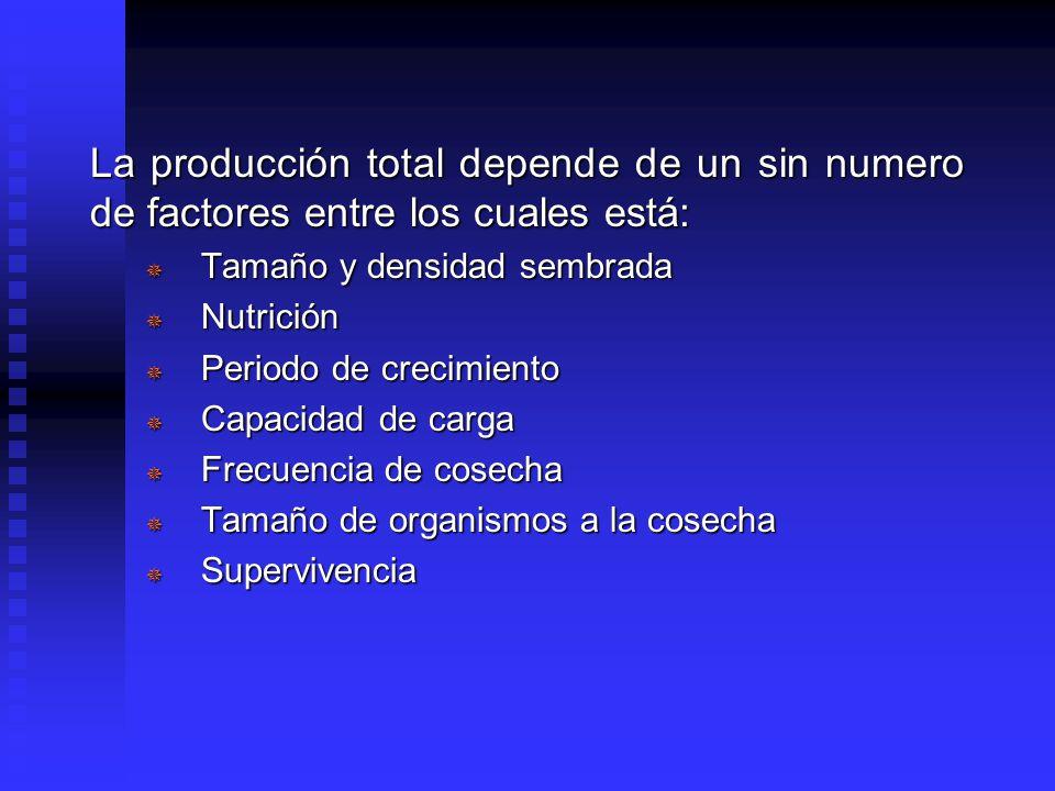La producción total depende de un sin numero de factores entre los cuales está: ¯ Tamaño y densidad sembrada ¯ Nutrición ¯ Periodo de crecimiento ¯ Capacidad de carga ¯ Frecuencia de cosecha ¯ Tamaño de organismos a la cosecha ¯ Supervivencia
