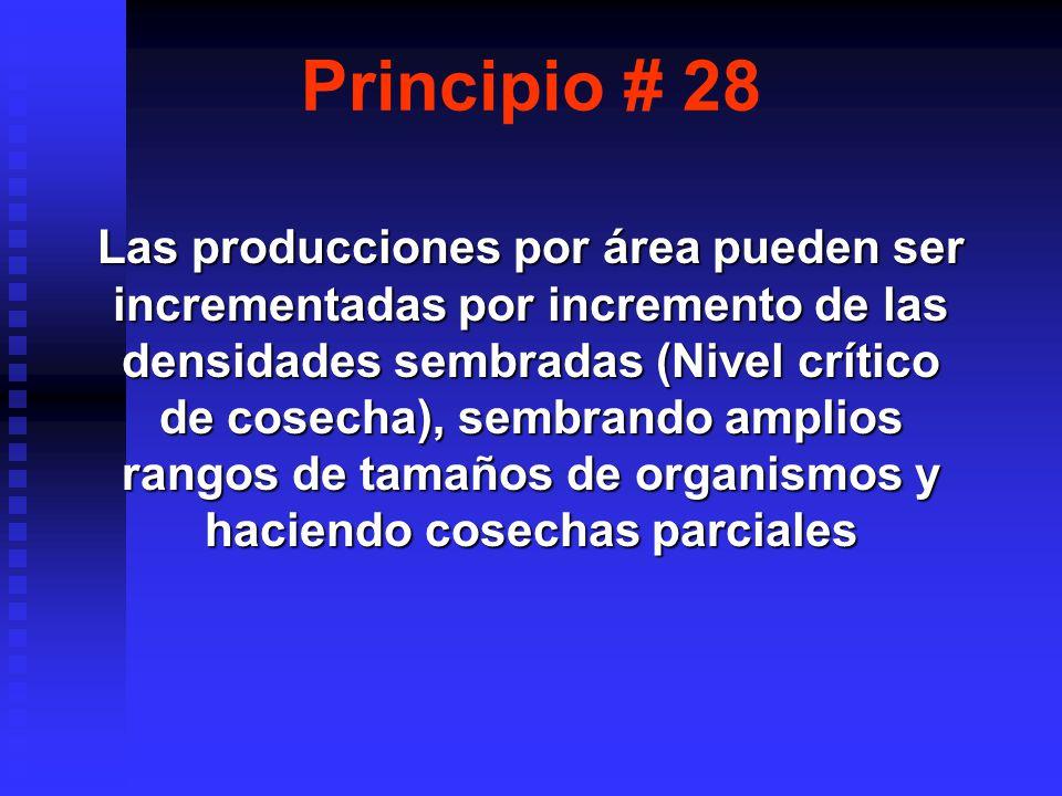 Principio # 28 Las producciones por área pueden ser incrementadas por incremento de las densidades sembradas (Nivel crítico de cosecha), sembrando amplios rangos de tamaños de organismos y haciendo cosechas parciales