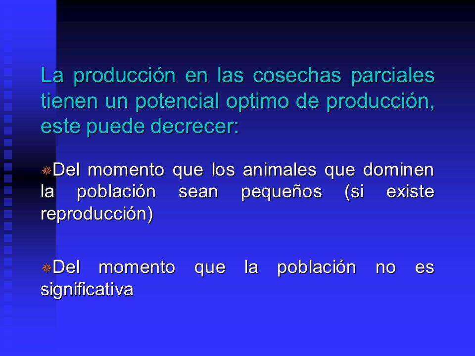 La producción en las cosechas parciales tienen un potencial optimo de producción, este puede decrecer: ¯ Del momento que los animales que dominen la población sean pequeños (si existe reproducción) ¯ Del momento que la población no es significativa