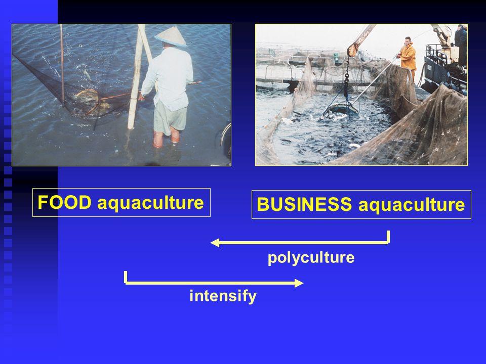 FOOD aquaculture BUSINESS aquaculture intensify polyculture