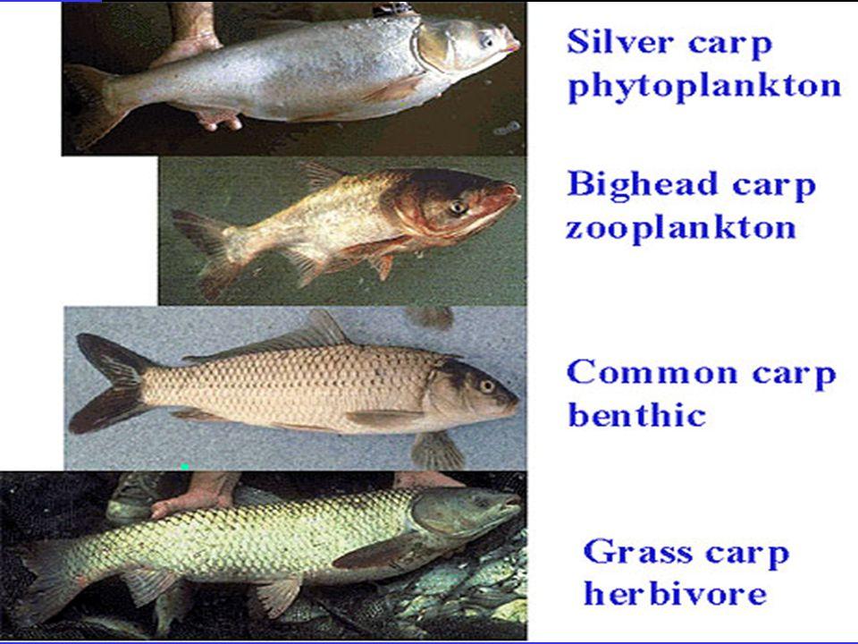 El control puede ser por : ¯ Predadores ¯ Cultivos monosexuales ¯ Represión ¯ Cosechas parciales ¯ Limitación de hábitat de reproducción ¯Reducción de cavidades ¯Eliminación de vegetación ¯Bajar niveles de agua ¯ Mortalidad natural
