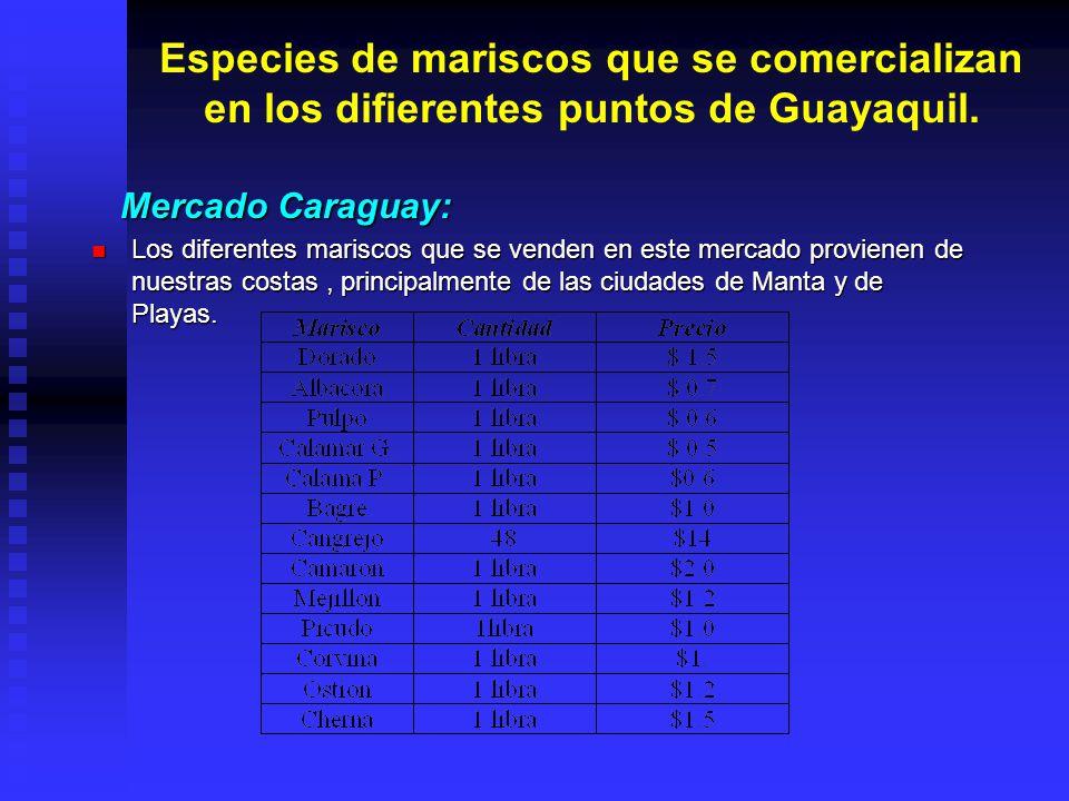 Especies de mariscos que se comercializan en los difierentes puntos de Guayaquil. Mercado Caraguay: Mercado Caraguay: Los diferentes mariscos que se v