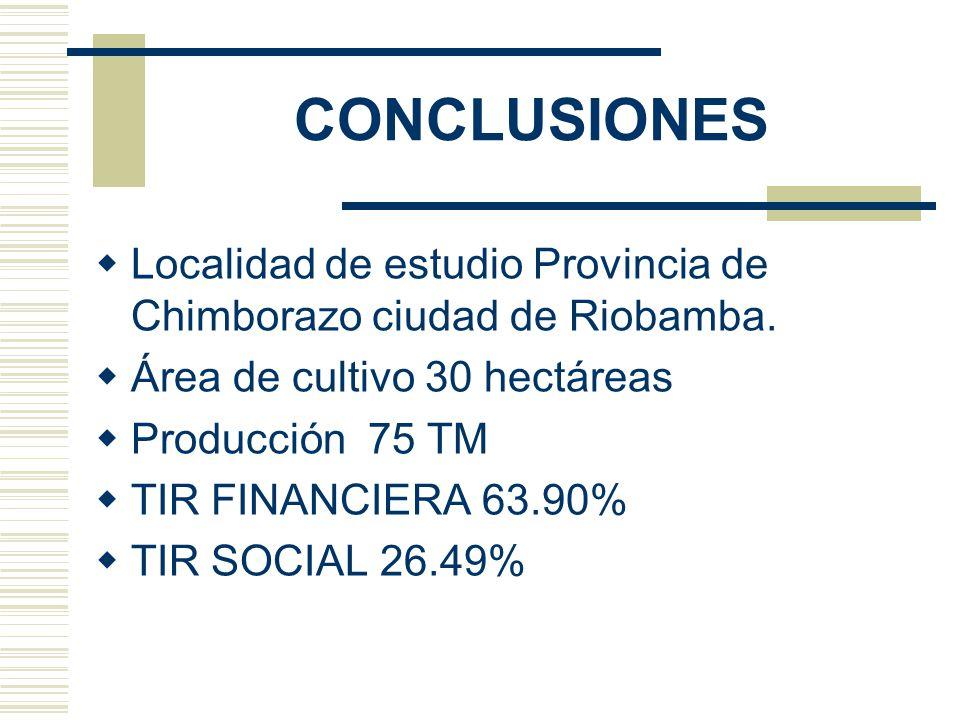 CONCLUSIONES Localidad de estudio Provincia de Chimborazo ciudad de Riobamba. Área de cultivo 30 hectáreas Producción 75 TM TIR FINANCIERA 63.90% TIR