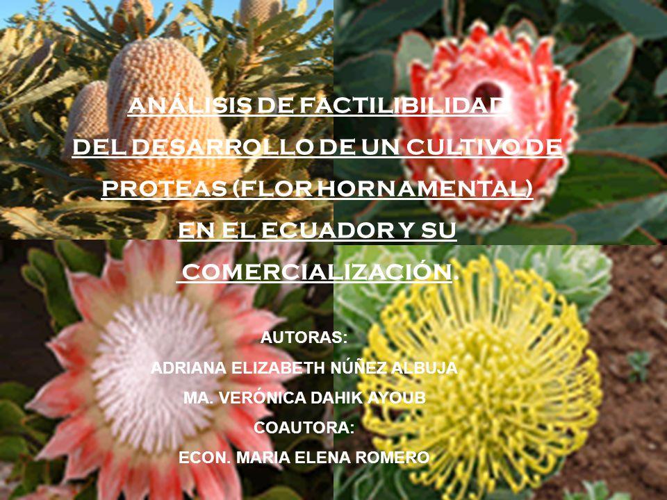 ANÁLISIS DE FACTILIBILIDAD DEL DESARROLLO DE UN CULTIVO DE PROTEAS (FLOR HORNAMENTAL) EN EL ECUADOR Y SU COMERCIALIZACIÓN.