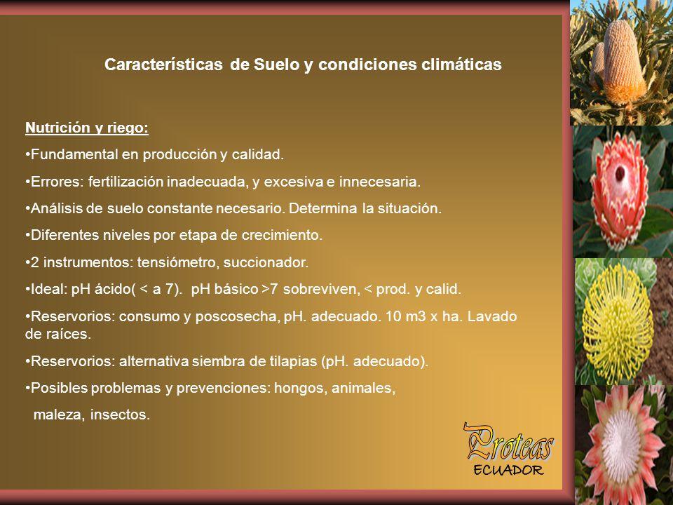 Características de Suelo y condiciones climáticas Nutrición y riego: Fundamental en producción y calidad.