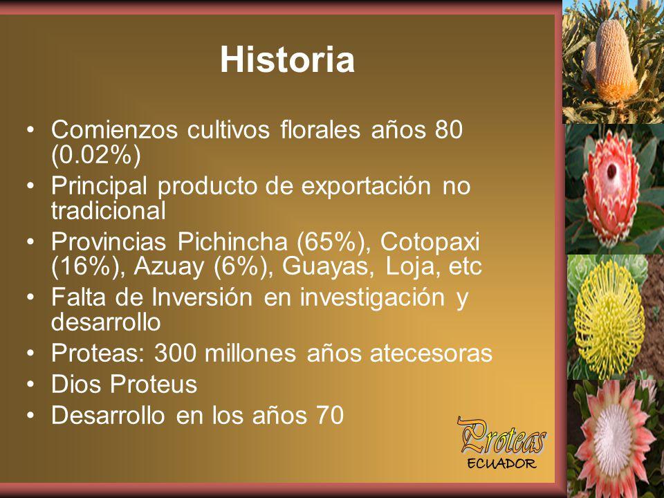 Historia Comienzos cultivos florales años 80 (0.02%) Principal producto de exportación no tradicional Provincias Pichincha (65%), Cotopaxi (16%), Azuay (6%), Guayas, Loja, etc Falta de Inversión en investigación y desarrollo Proteas: 300 millones años atecesoras Dios Proteus Desarrollo en los años 70