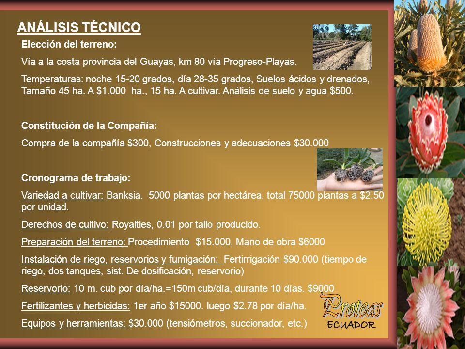 ANÁLISIS TÉCNICO Elección del terreno: Vía a la costa provincia del Guayas, km 80 vía Progreso-Playas.