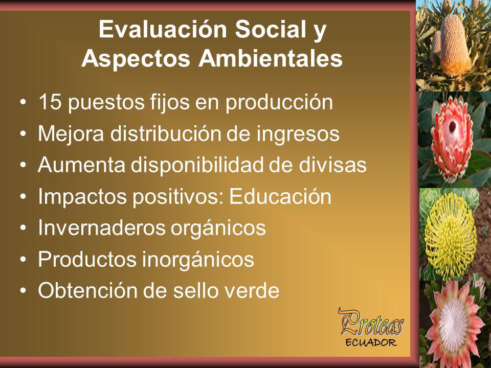 Evaluación Social y Aspectos Ambientales 15 puestos fijos en producción Mejora distribución de ingresos Aumenta disponibilidad de divisas Impactos positivos: Educación Invernaderos orgánicos Productos inorgánicos Obtención de sello verde