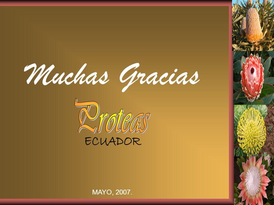Muchas Gracias MAYO, 2007.