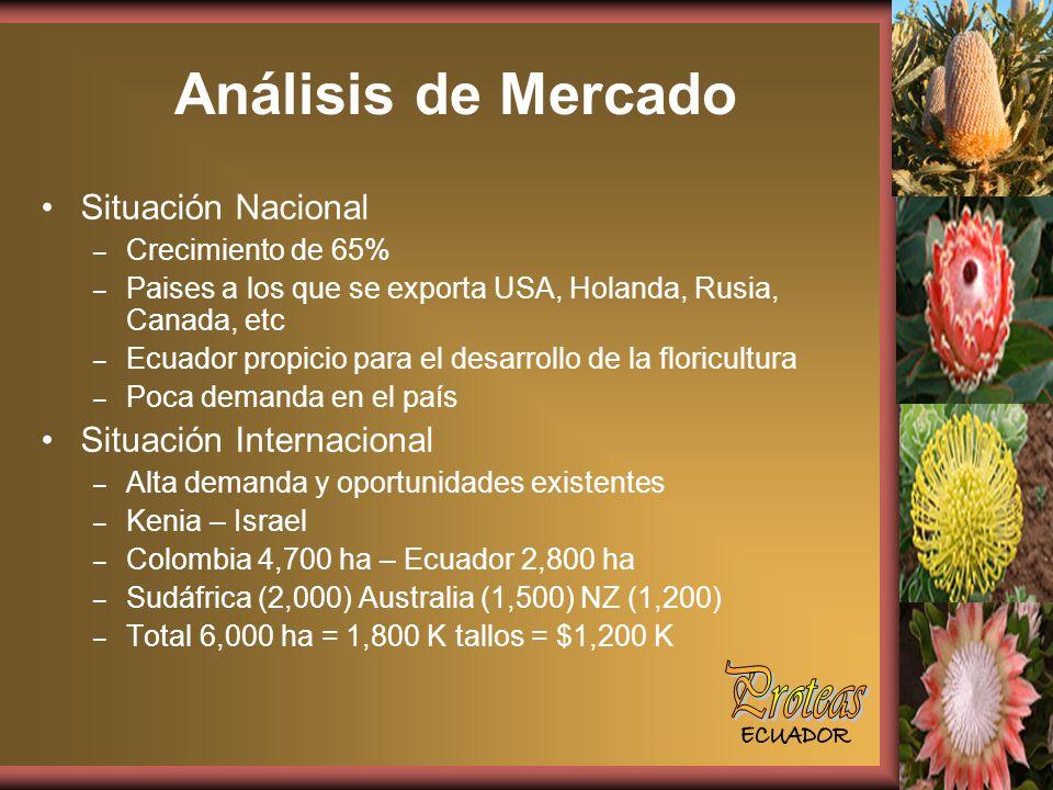 Análisis de Mercado Situación Nacional – Crecimiento de 65% – Paises a los que se exporta USA, Holanda, Rusia, Canada, etc – Ecuador propicio para el desarrollo de la floricultura – Poca demanda en el país Situación Internacional – Alta demanda y oportunidades existentes – Kenia – Israel – Colombia 4,700 ha – Ecuador 2,800 ha – Sudáfrica (2,000) Australia (1,500) NZ (1,200) – Total 6,000 ha = 1,800 K tallos = $1,200 K