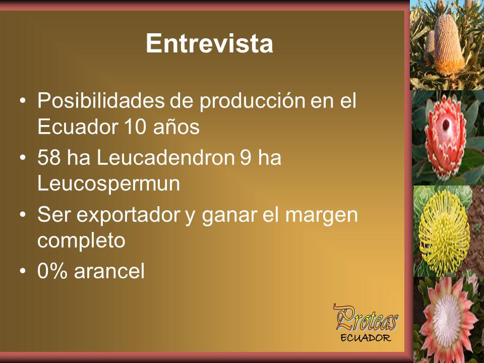 Entrevista Posibilidades de producción en el Ecuador 10 años 58 ha Leucadendron 9 ha Leucospermun Ser exportador y ganar el margen completo 0% arancel