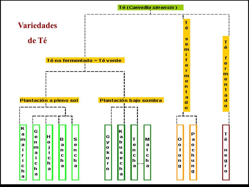 Demanda Internacional para el té negro ecuatoriano Fuente: Banco Central del Ecuador Elaborado por: Los Autores Fuente: Banco Central del Ecuador Elaborado por: Los Autores Precios del Té Negro ecuatoriano por Kg.