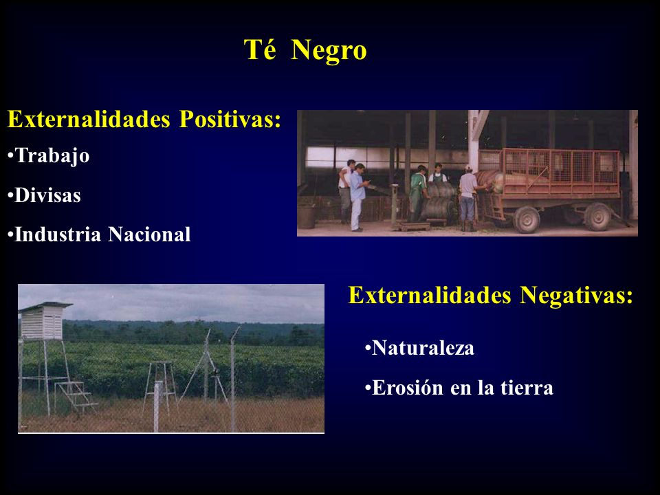 Externalidades Positivas: Trabajo Divisas Industria Nacional Externalidades Negativas: Naturaleza Erosión en la tierra Té Negro