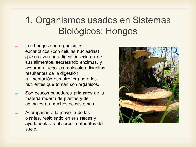 1. Organismos usados en Sistemas Biológicos: Hongos Los hongos son organismos eucarióticos (con células nucleadas) que realizan una digestión externa