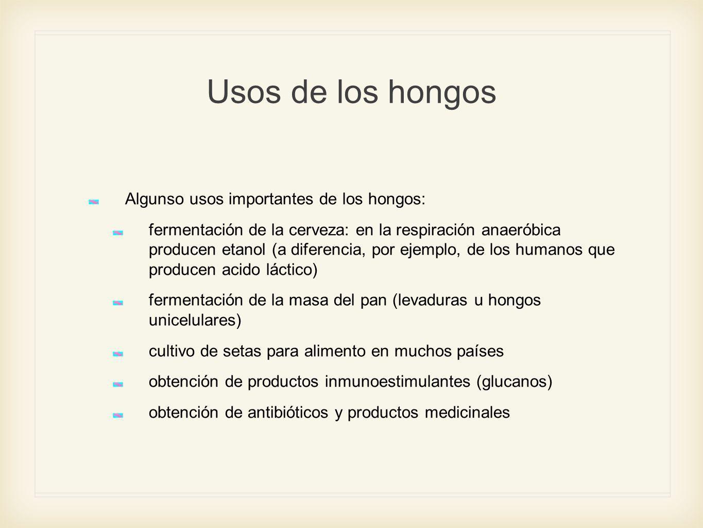Usos de los hongos Algunso usos importantes de los hongos: fermentación de la cerveza: en la respiración anaeróbica producen etanol (a diferencia, por