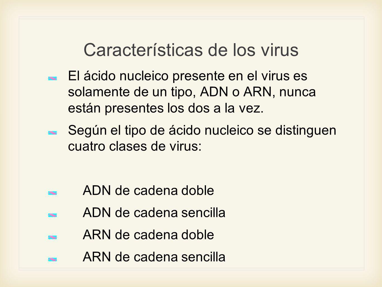 Características de los virus El ácido nucleico presente en el virus es solamente de un tipo, ADN o ARN, nunca están presentes los dos a la vez. Según