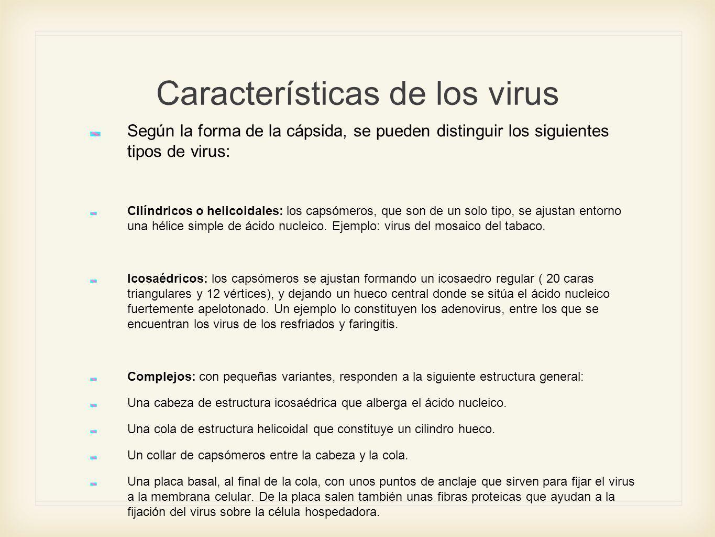 Características de los virus Según la forma de la cápsida, se pueden distinguir los siguientes tipos de virus: Cilíndricos o helicoidales: los capsóme