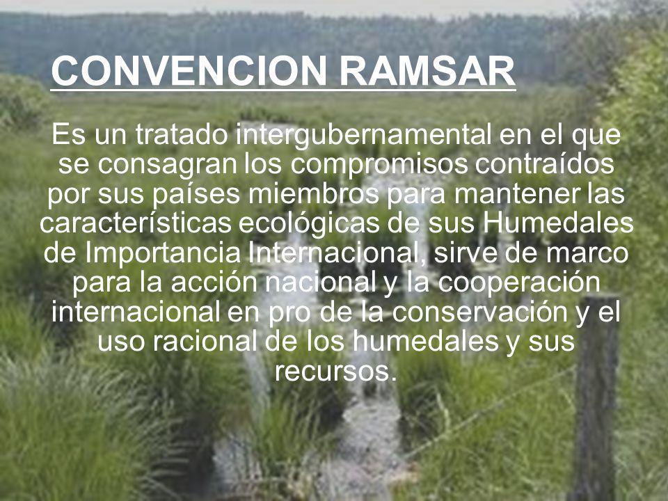 UNIVERSIDAD TECNOLÓGICA ECOTEC.ISO 9001:2008 UNIVERSIDAD TECNOLÓGICA ECOTEC.ISO 9001:2008 CONVENCION RAMSAR Es un tratado intergubernamental en el que se consagran los compromisos contraídos por sus países miembros para mantener las características ecológicas de sus Humedales de Importancia Internacional, sirve de marco para la acción nacional y la cooperación internacional en pro de la conservación y el uso racional de los humedales y sus recursos.