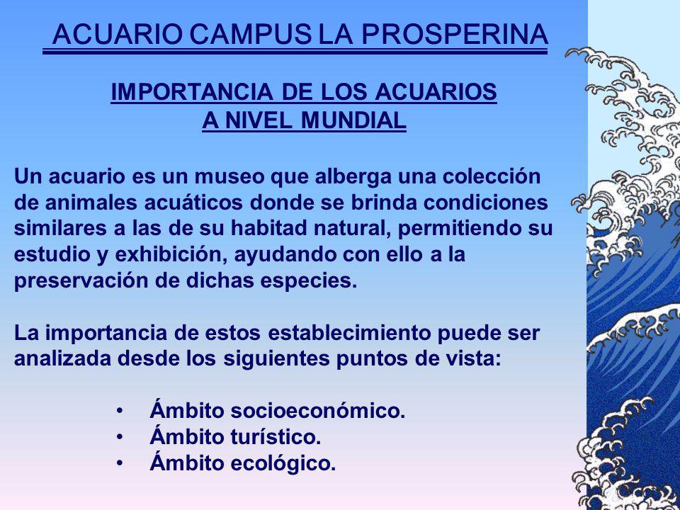 IMPORTANCIA DE LOS ACUARIOS A NIVEL MUNDIAL Un acuario es un museo que alberga una colección de animales acuáticos donde se brinda condiciones similares a las de su habitad natural, permitiendo su estudio y exhibición, ayudando con ello a la preservación de dichas especies.
