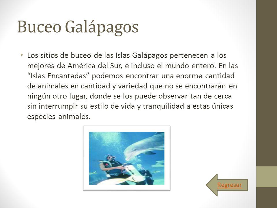 Buceo Galápagos Los sitios de buceo de las Islas Galápagos pertenecen a los mejores de América del Sur, e incluso el mundo entero. En las Islas Encant