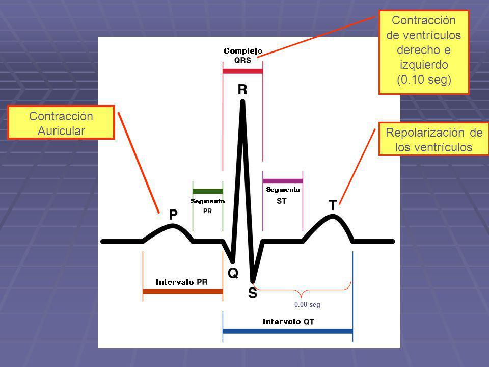 Contracción Auricular Contracción de ventrículos derecho e izquierdo (0.10 seg) Repolarización de los ventrículos 0.08 seg