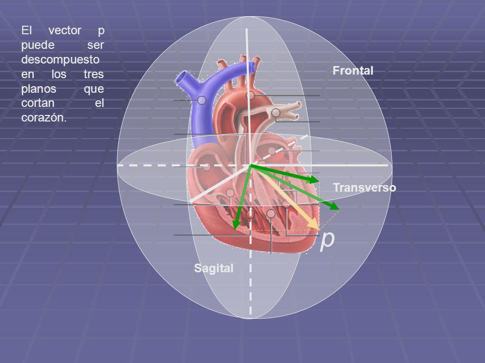 El vector p puede ser descompuesto en los tres planos que cortan el corazón. Frontal Transverso Sagital p