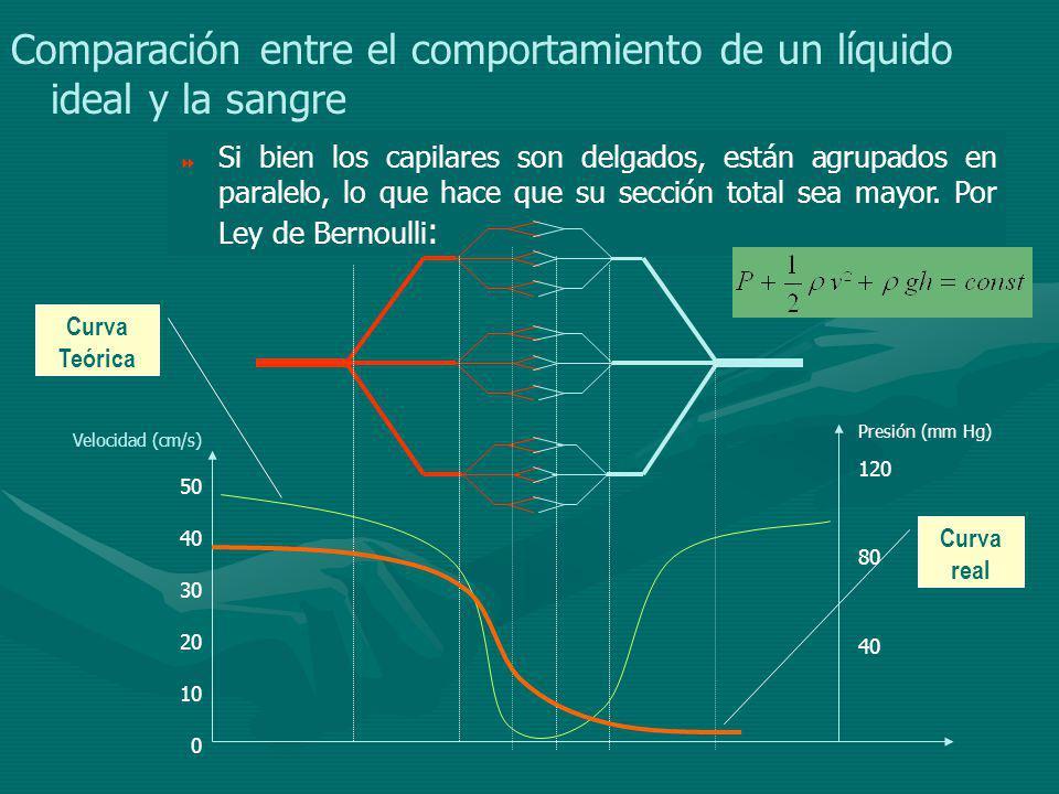 Comparación entre el comportamiento de un líquido ideal y la sangre Si bien los capilares son delgados, están agrupados en paralelo, lo que hace que su sección total sea mayor.