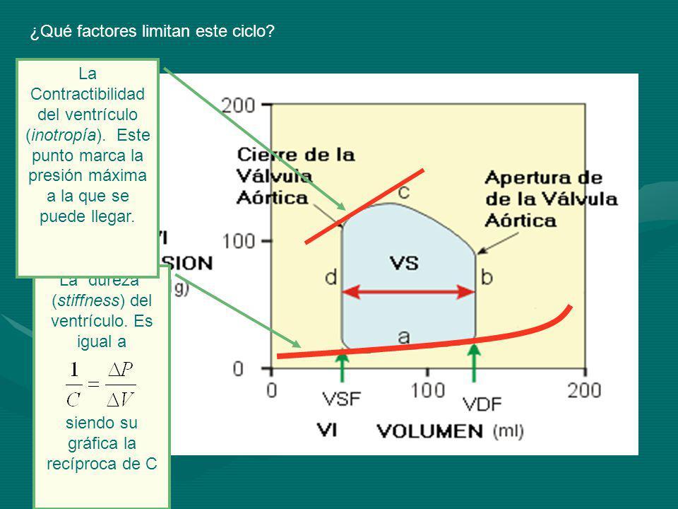 ¿Qué factores limitan este ciclo.La dureza (stiffness) del ventrículo.