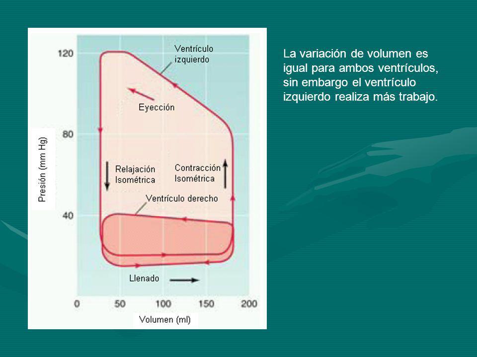 La variación de volumen es igual para ambos ventrículos, sin embargo el ventrículo izquierdo realiza más trabajo.
