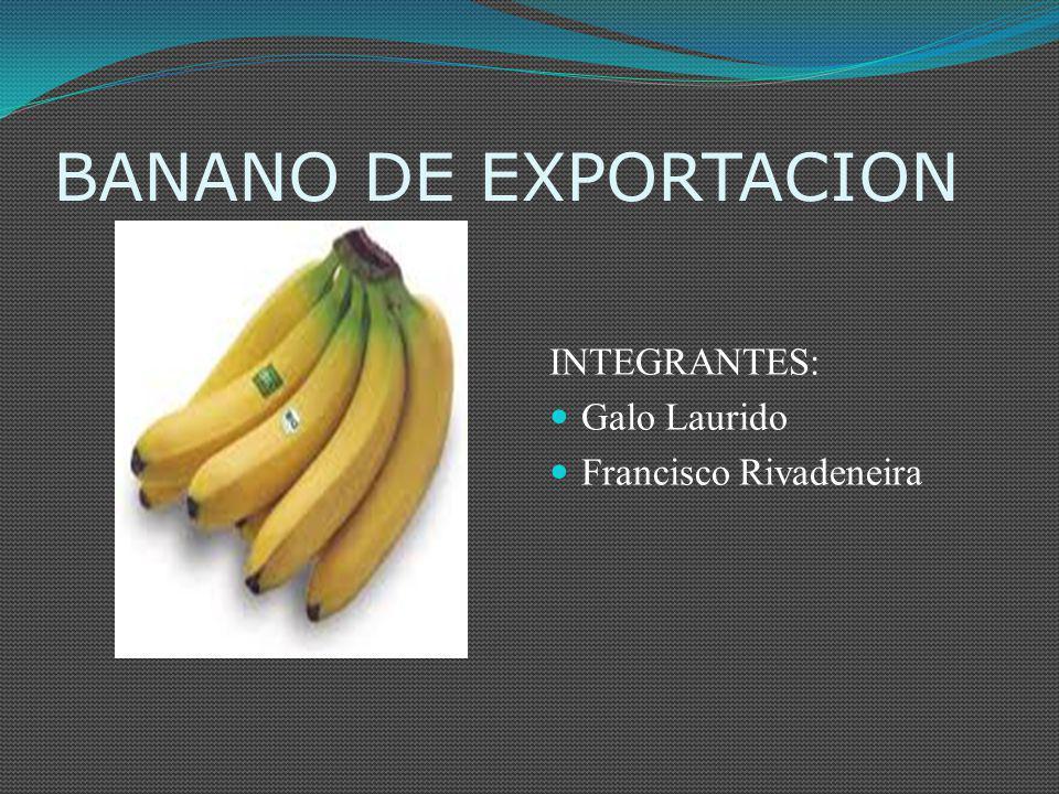 BANANO DE EXPORTACION INTEGRANTES: Galo Laurido Francisco Rivadeneira