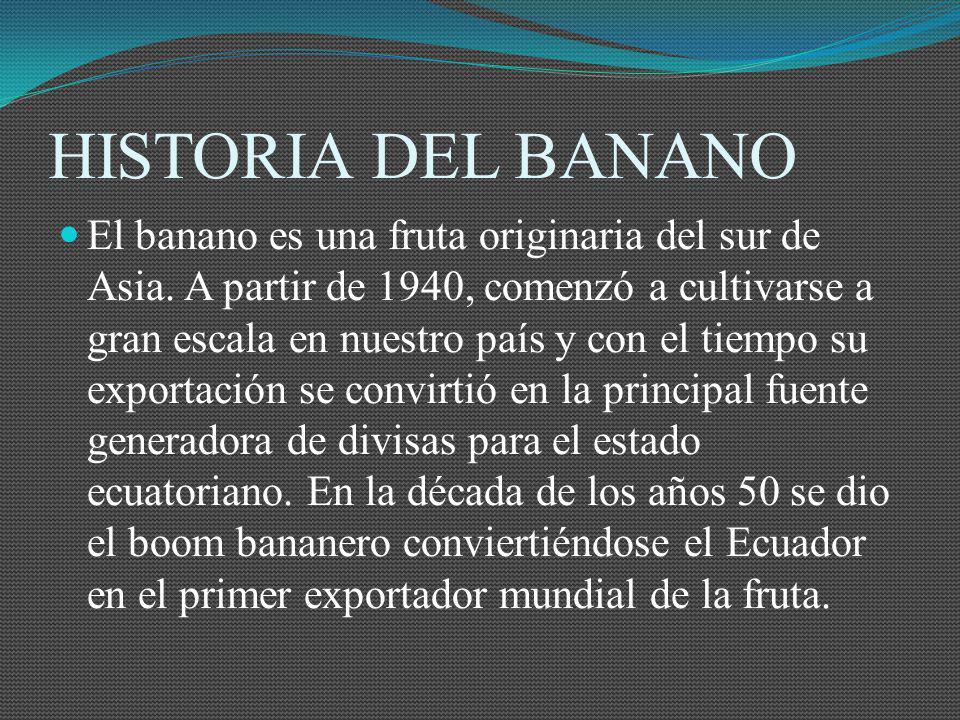 HISTORIA DEL BANANO El banano es una fruta originaria del sur de Asia. A partir de 1940, comenzó a cultivarse a gran escala en nuestro país y con el t