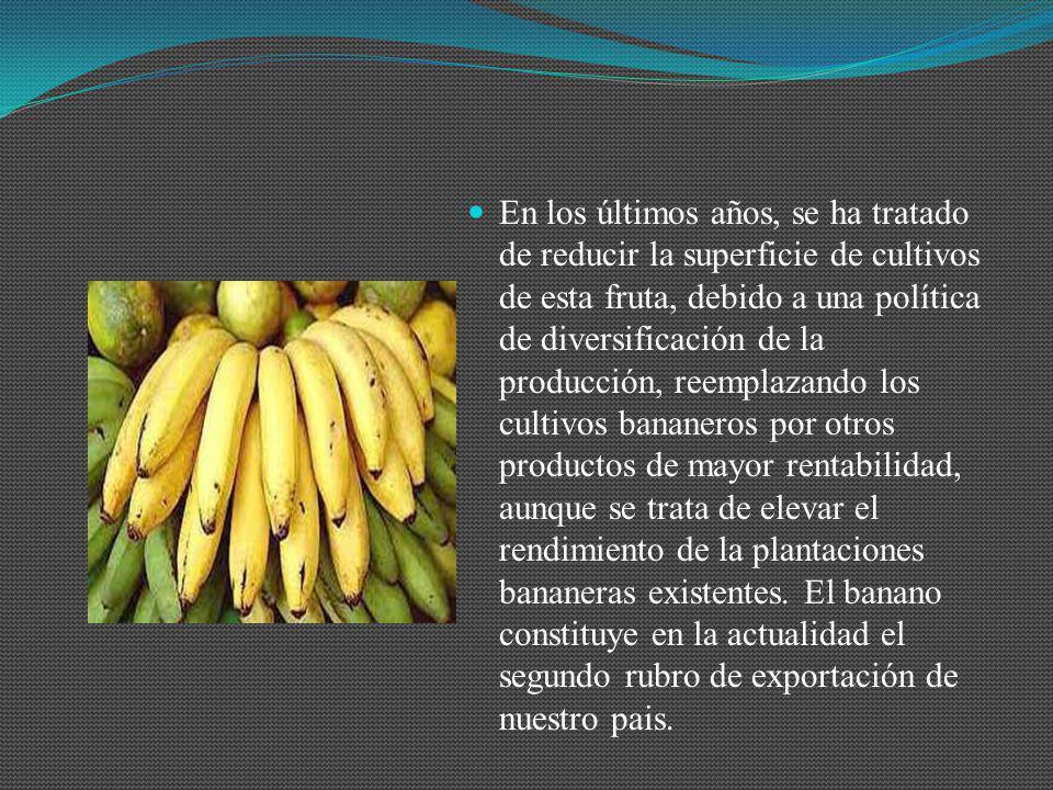 En los últimos años, se ha tratado de reducir la superficie de cultivos de esta fruta, debido a una política de diversificación de la producción, reem