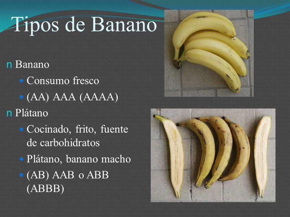 Oferta del Banano La oferta mundial del banano, según la FAO, en el año 2002 fue de 14´620.000 toneladas, equivalentes a aproximadamente unas 806 millones de cajas.