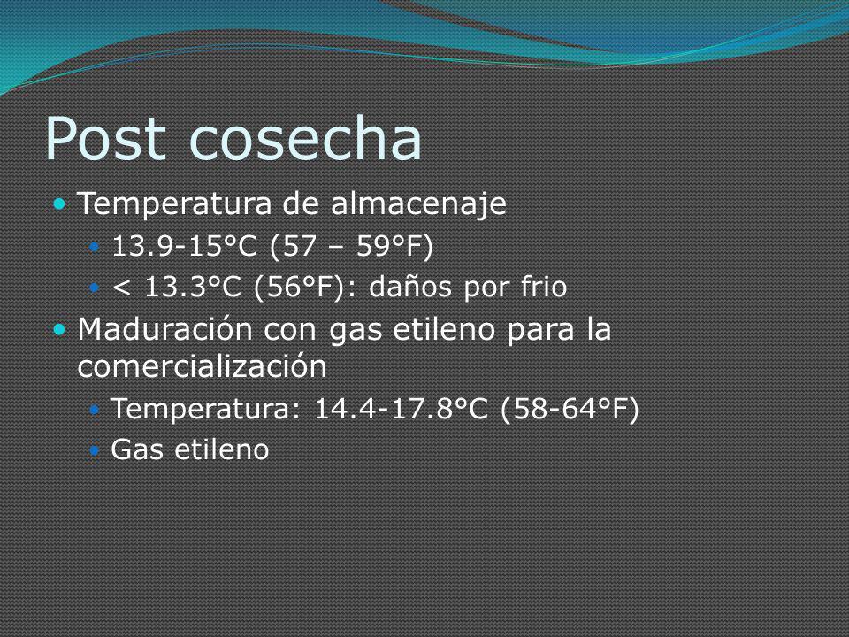 Post cosecha Temperatura de almacenaje 13.9-15°C (57 – 59°F) < 13.3°C (56°F): daños por frio Maduración con gas etileno para la comercialización Tempe