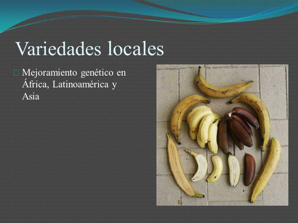 El Comercio del Banano en el mundo El crecimiento de la producción mundial de banano durante el periodo 2000-2007 fue del 3.5% en promedio; mientras que la producción de los 20 principales productores de banano fue en promedio durante el mismo periodo, del 4.8%.