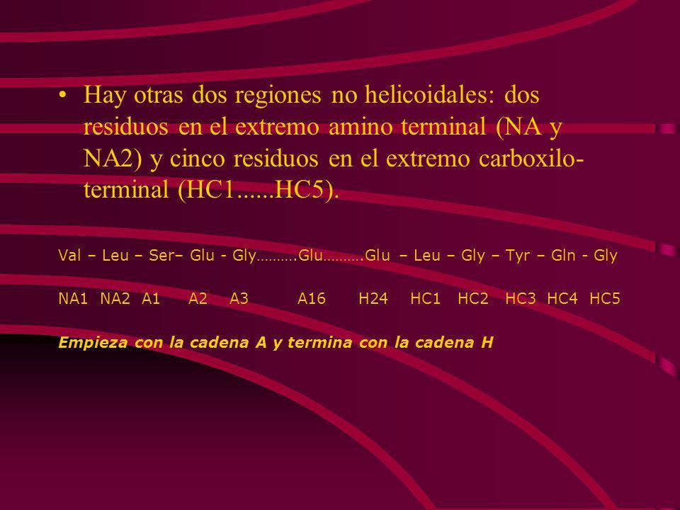 LA MIOGLOBINA TIENE UNA ESTRUCTURA COMPACTA Y UN ALTO CONTENIDO DE HÉLICES Características: Compacta (45 x 35 x 25 Å). 75% hélice dextrógiras. Existen