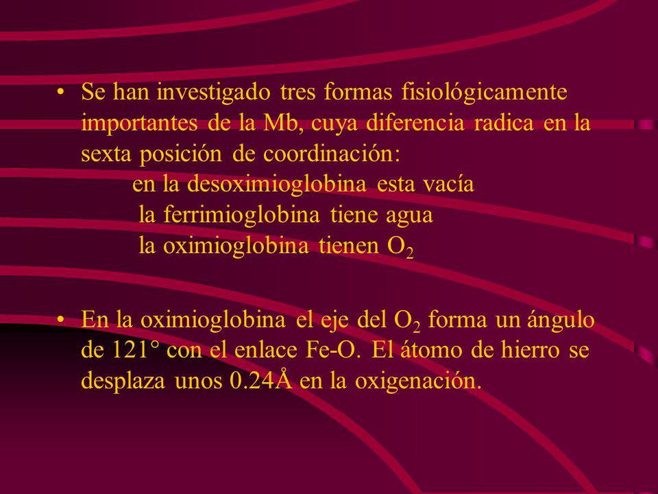 El hierro queda unos 0.34 Å fuera del plano hacia el lado de la histidina proximal. El oxígeno se une a la sexta posición de coordinación.La histidina