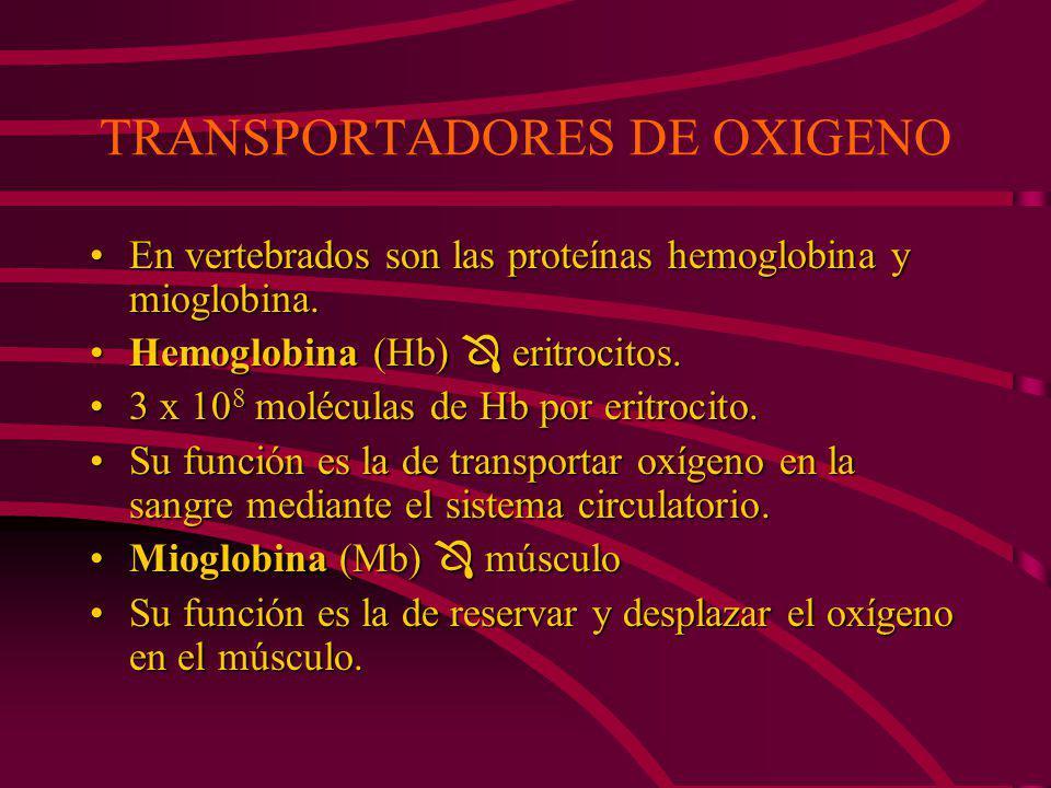 TRANSPORTADORES DE OXIGENO En vertebrados son las proteínas hemoglobina y mioglobina.En vertebrados son las proteínas hemoglobina y mioglobina.