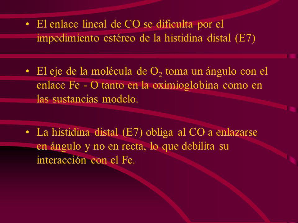 En la carboximioglobina el Fe - C toma un ángulo de 121° en el eje del CO. C N His E7 C N O H C Fe N C N - C