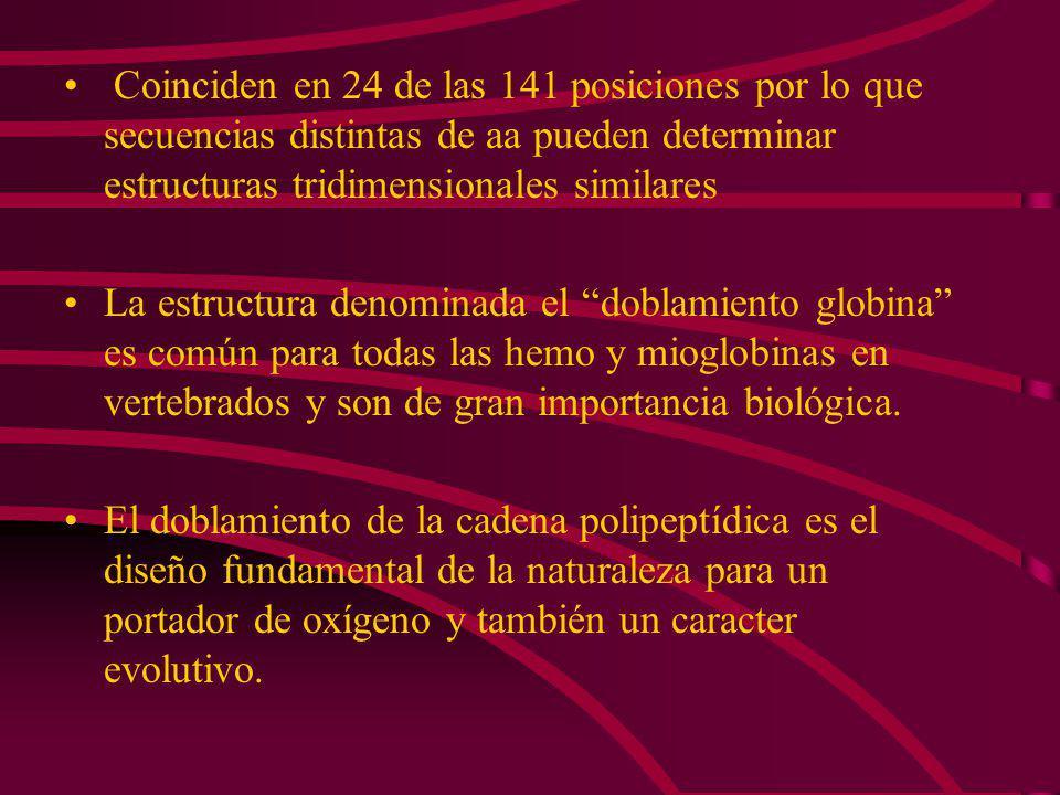 LA ESTRUCTURA TERCIARIA DE LAS CADENAS y DE LA HEMOGLOBINA ES MUY SEMEJANTE A LA MIOGLOBINA Las estructuras tridimensionales de la mioglobina y de las